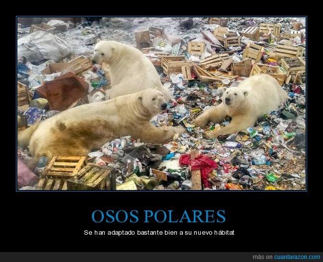basura,basurero,hábitat,osos polares