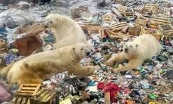 Enlace a Pobres osos...