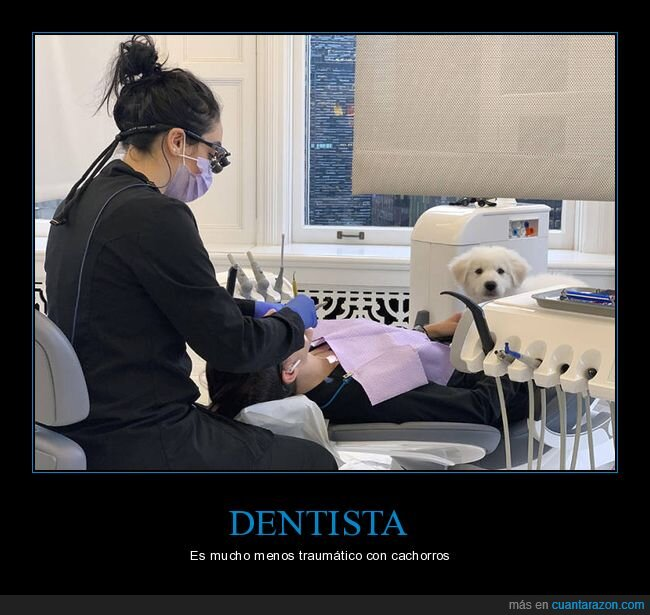 cachorro,dentista,perro