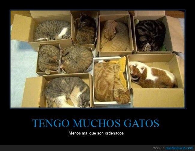 cajas,gatos,ordenados