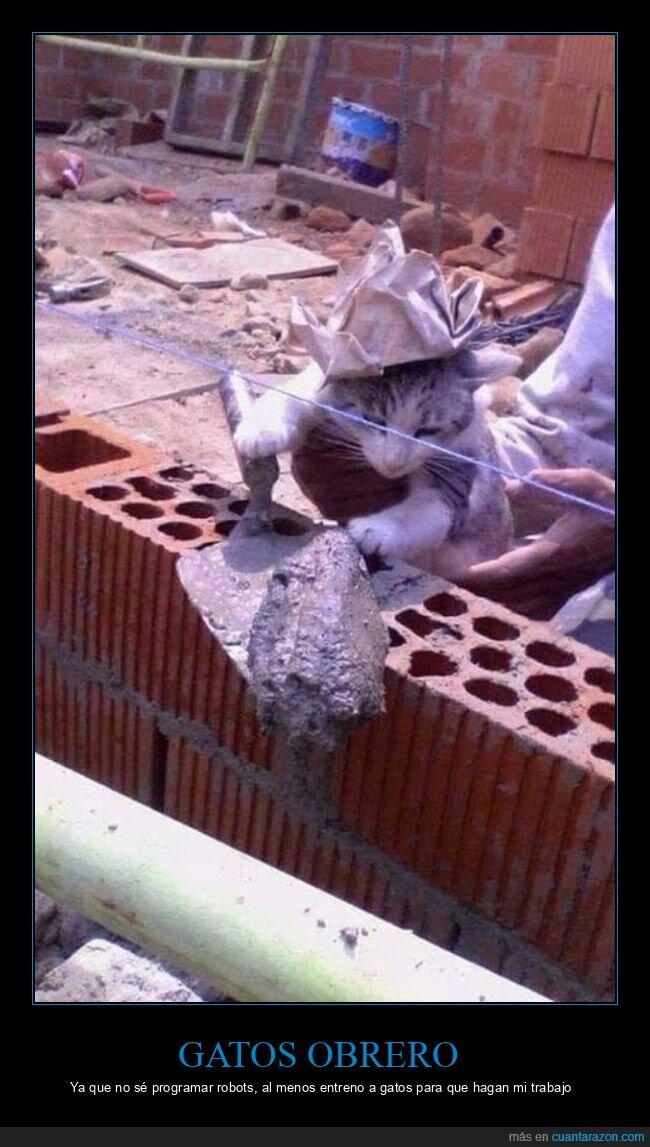 gato,obra,obrero,paleta