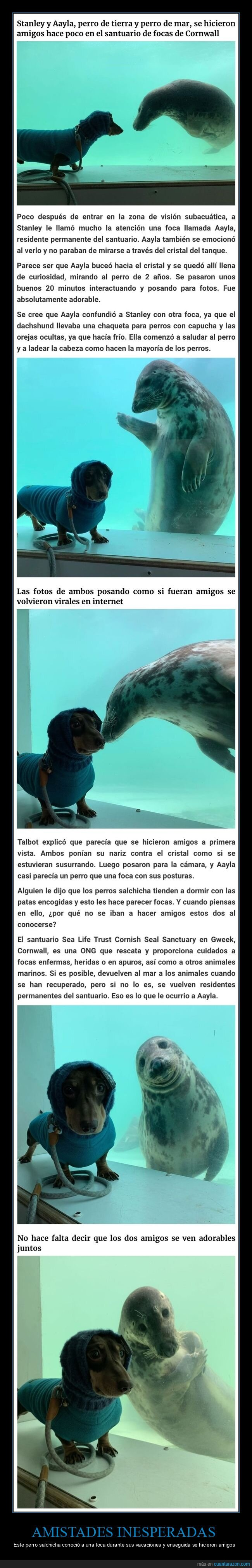 amigos,foca,perro