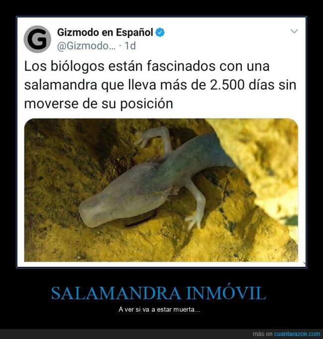 biólogos,fascinados,muerta,quieta,salamandra