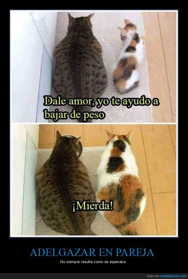 adelgazar,gatos,gordos
