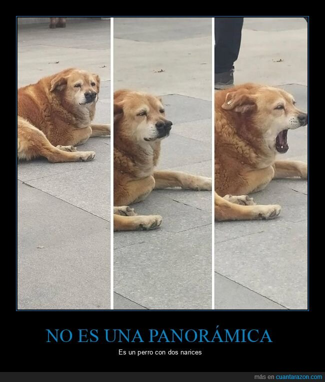 narices,perro,wtf