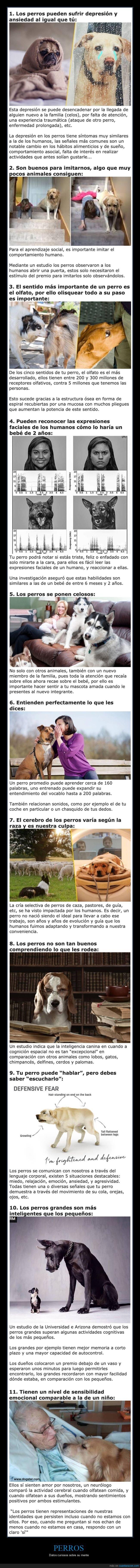 curiosidades,mente,perros