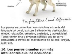 Enlace a Datos curiosos sobre la mente de tu perro