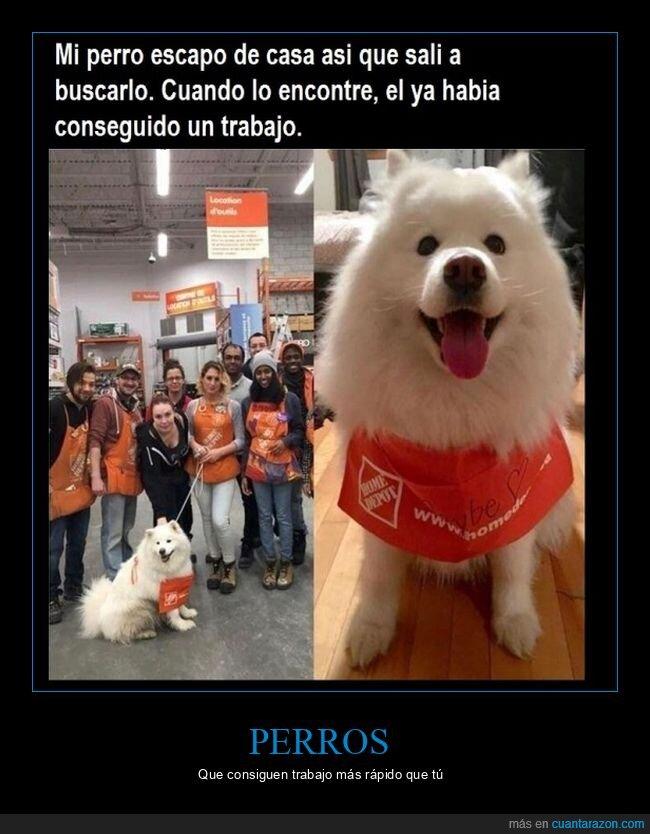 encontrar,escapar,perro,trabajo