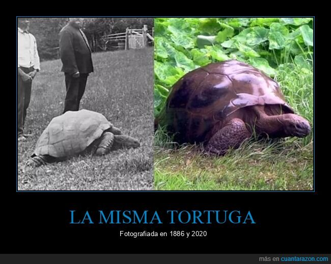 1886,2020,ahora,antes,tortuga