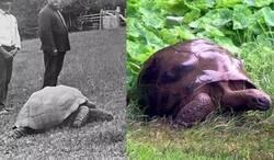 Enlace a Tortuga centenaria