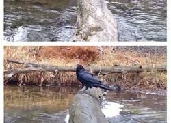 Enlace a Este hombre graba a los animales salvajes que usan este tronco como puente, y se sorprende de cuántos distintos hay