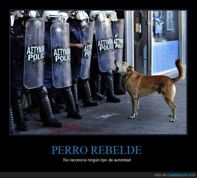 ladrando,perro,policía
