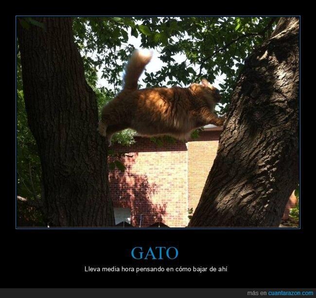 árboles,bajar,gato