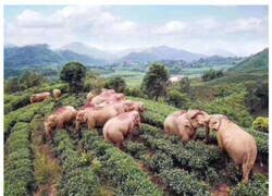 Enlace a Fiesta de elefantes