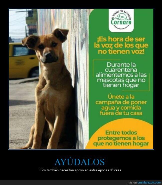 agua,ayudar,comida,perros,sin hogar