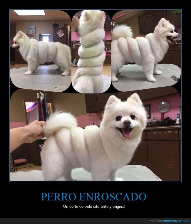 corte de pelo,enroscado,perro