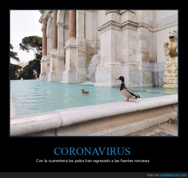 coronavirus,cuarentena,fuentes,patos