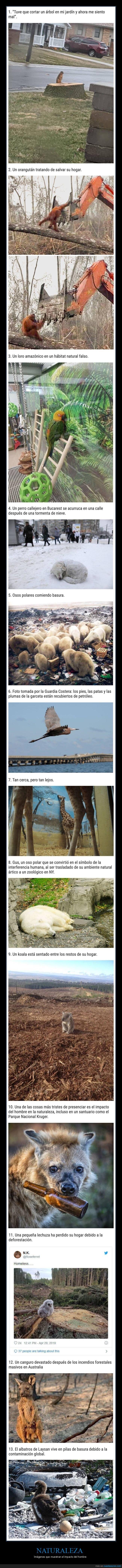 animales,impacto del hombre,naturaleza