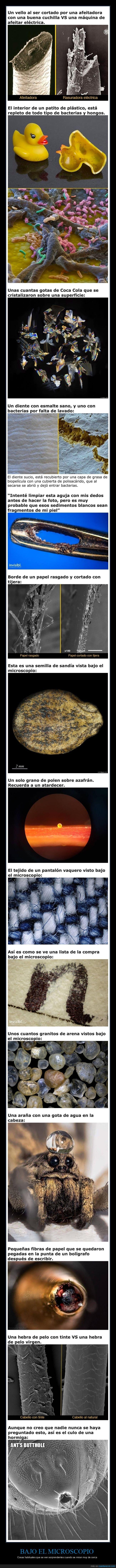 curiosidades,microscopio