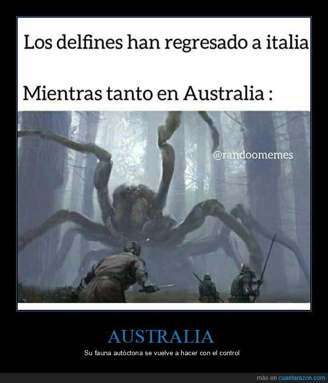 araña,australia,coronavirus,cuarentena,delfines,gigante,italia,regresar