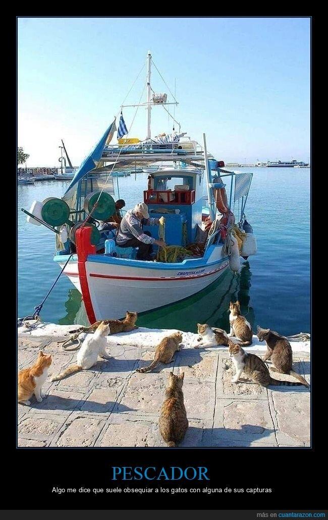 barco,gatos,pescador