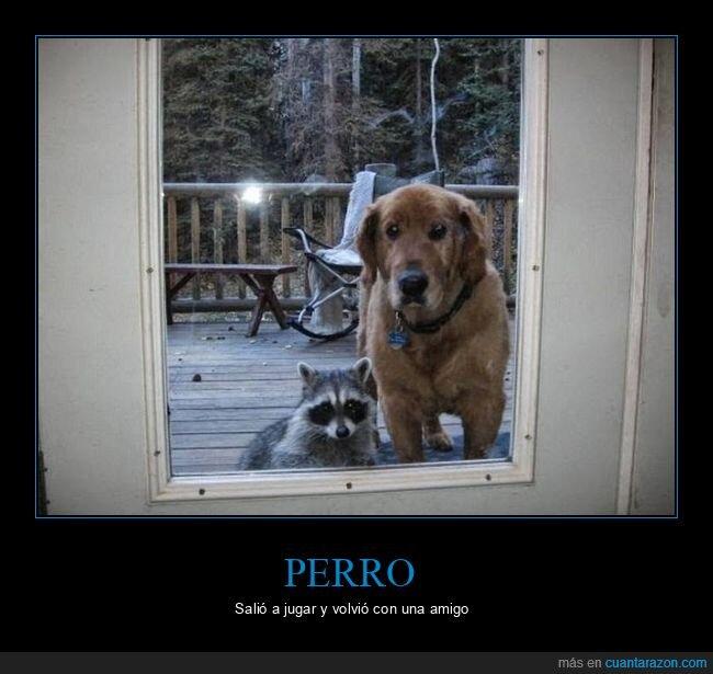 mapache,perro,puerta,wtf