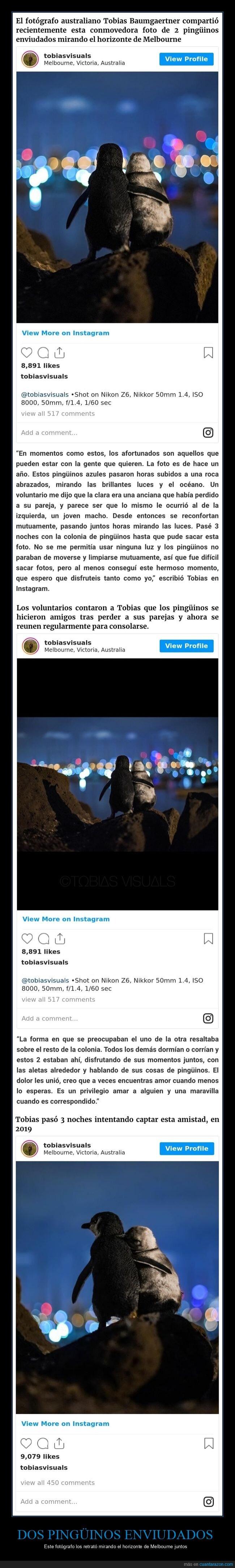 fotografía,melbourne,pingüinos