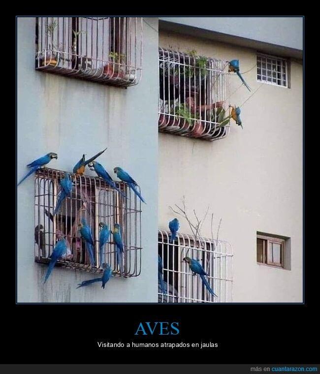 aves,coronavirus,cuarentena,humanos,jaulas,visitando