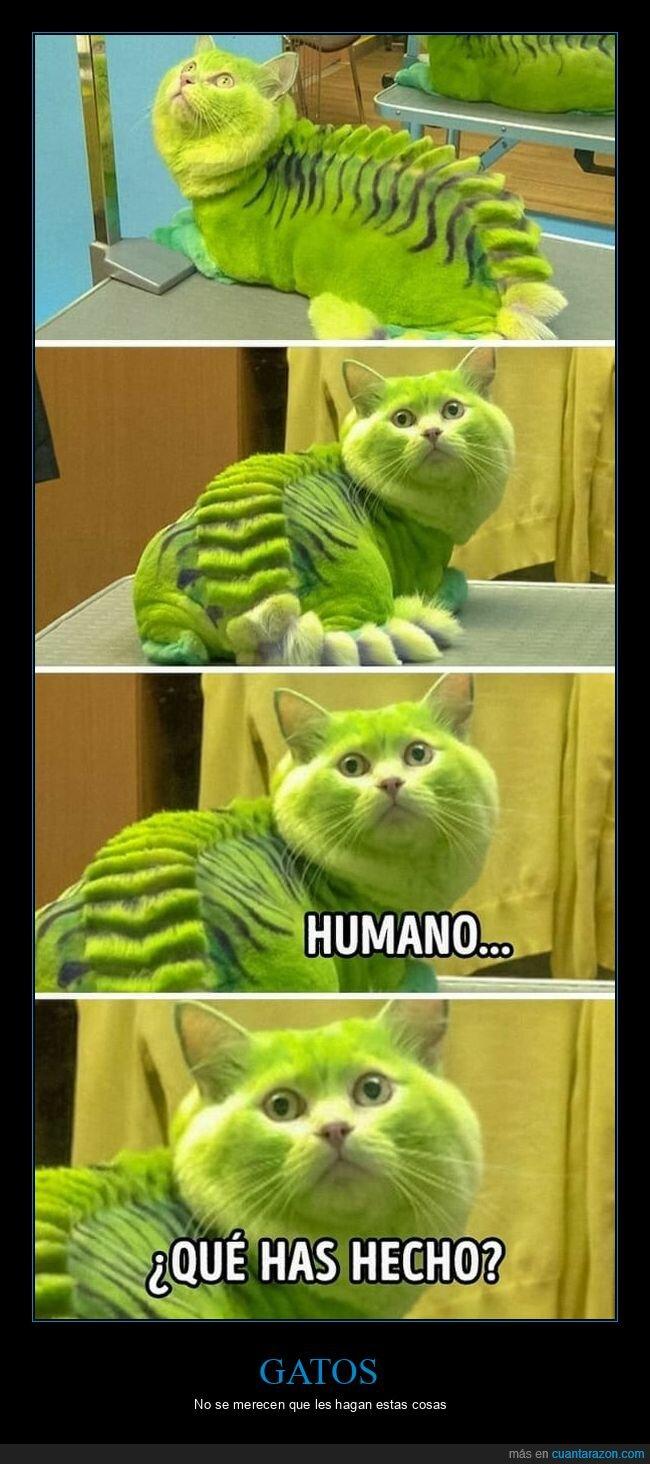 gato,verde,wtf