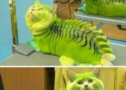 Enlace a Pobre gato...