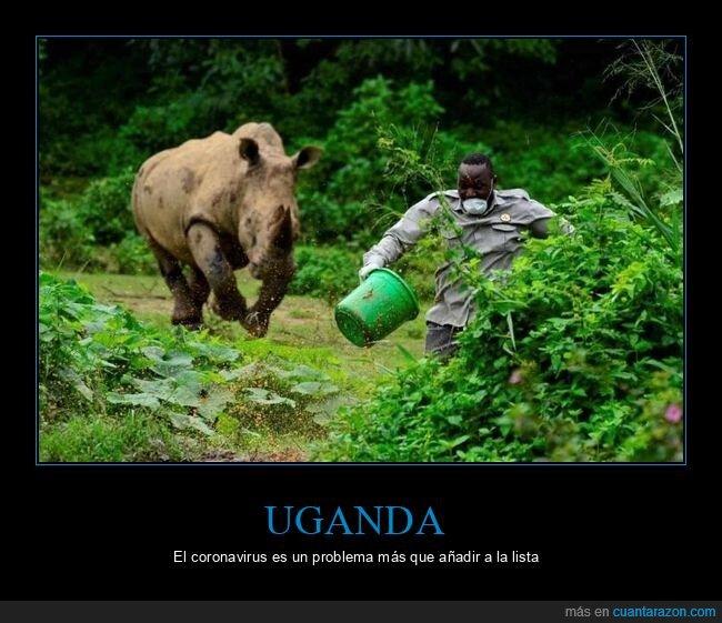 coronavirus,cuarentena,huyendo,rinoceronte,uganda