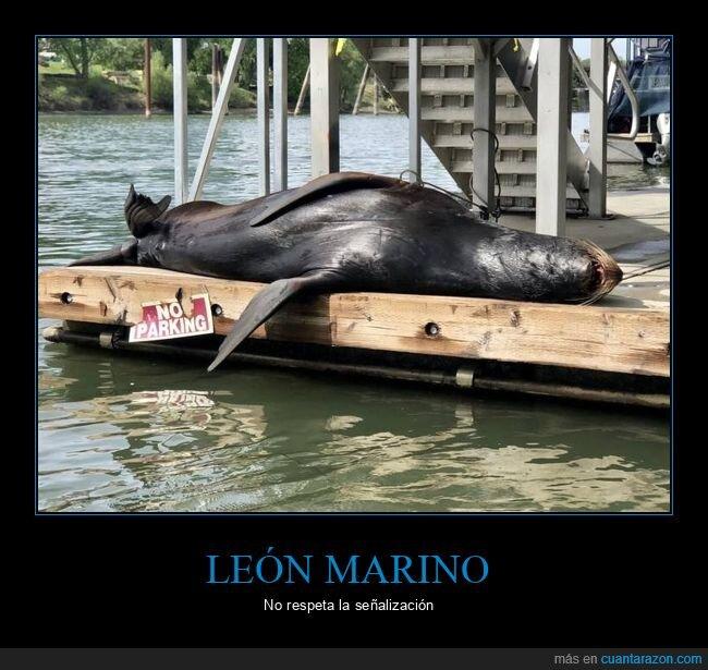 cartel,durmiendo,león marino,no aparcar