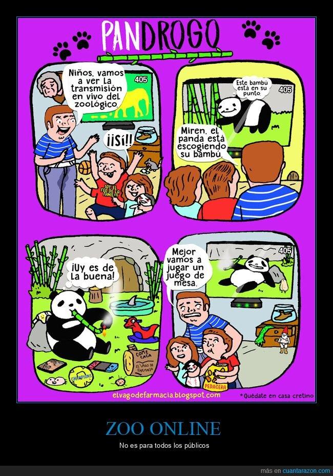 bambú,drogándose,panda