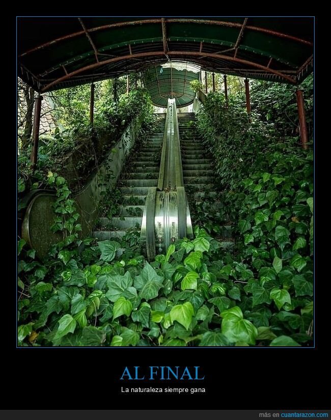 escaleras mecánicas,naturaleza,vegetación