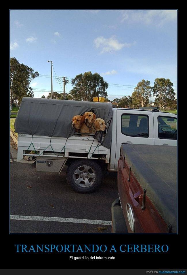 camioneta,cerbero,perros