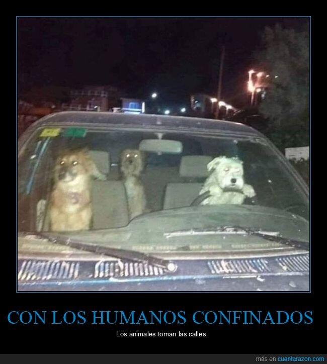 coche,coronavirus,cuarentena,perros