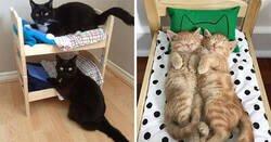 Enlace a Ikea vende camitas de juguete para las muñecas, y la gente las compra para sus gatos
