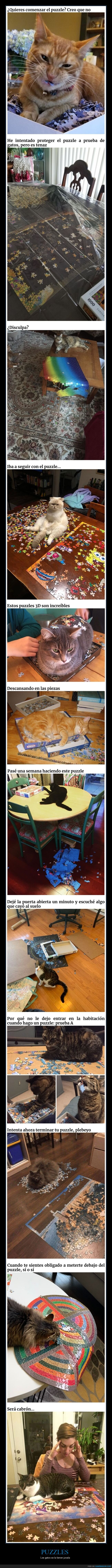 fails,gatos,puzzles
