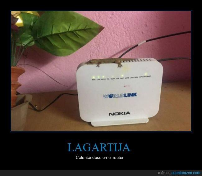 calor,lagartija,router