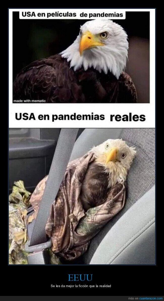 águila,coronavirus,eeuu,expectativas,pandemia,realidad
