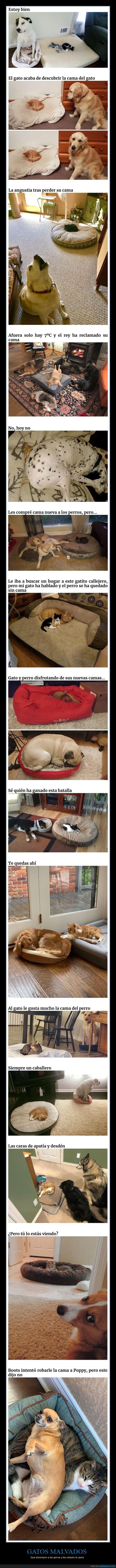 cama,gatos,perros,robar