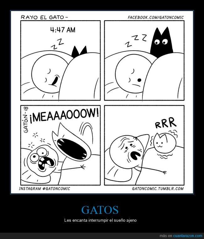 despertar,durmiendo,gato