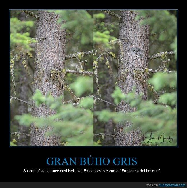 árbol,búho,camuflaje