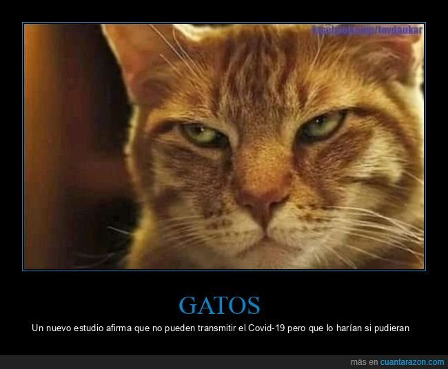 coronavirus,gatos,transmitir