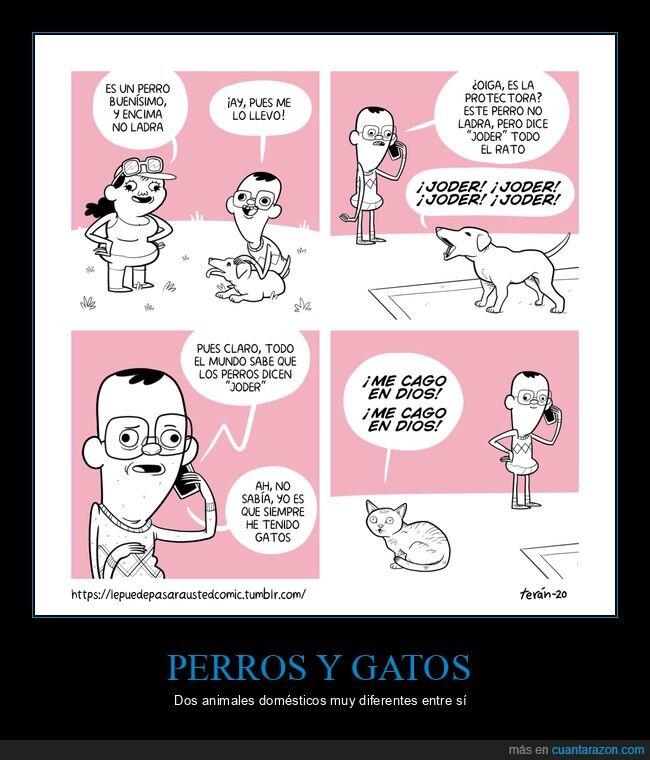 gato,ladrar,perro
