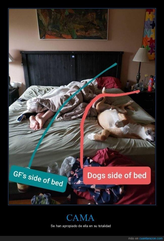 cama,novia,perro
