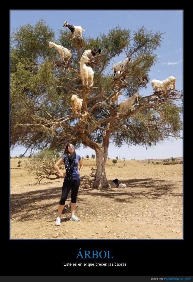 árbol,cabras,wtf