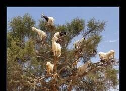 Enlace a Y de ahí es de donde vienen las cabras