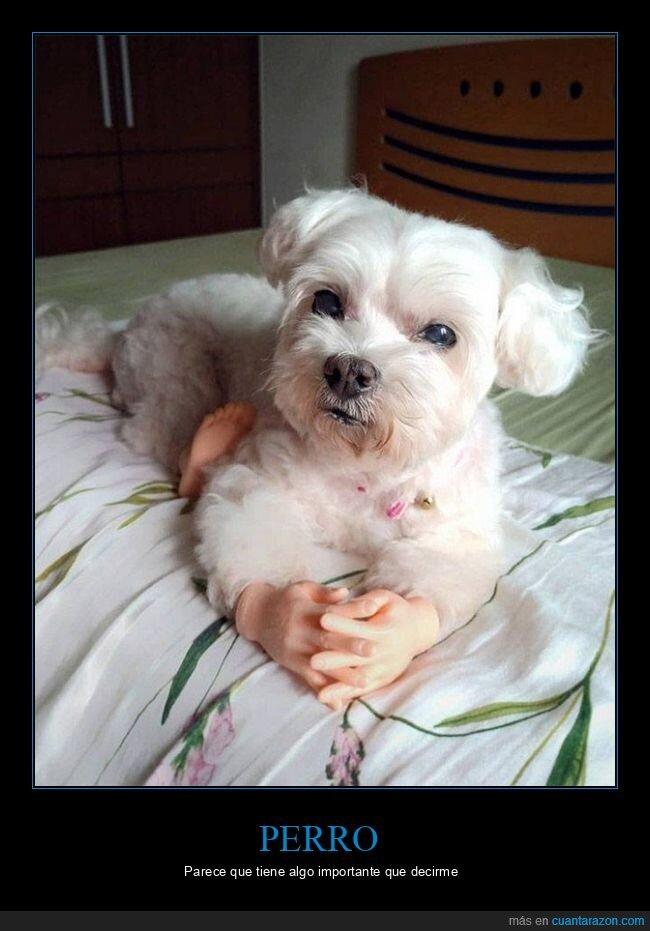 manos,perro,wtf