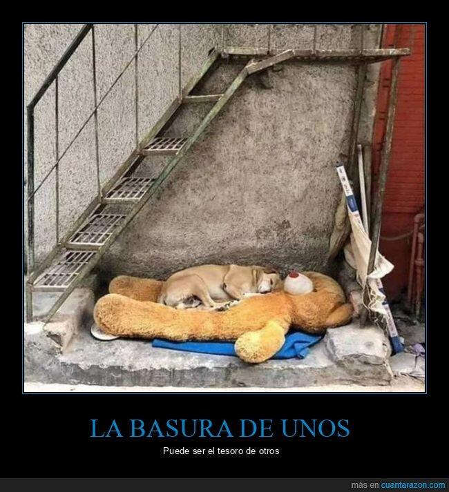 basura,durmiendo,peluche,perro